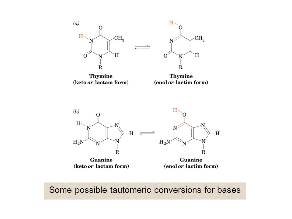 N-Glycoside conformation: syn and anti conformations