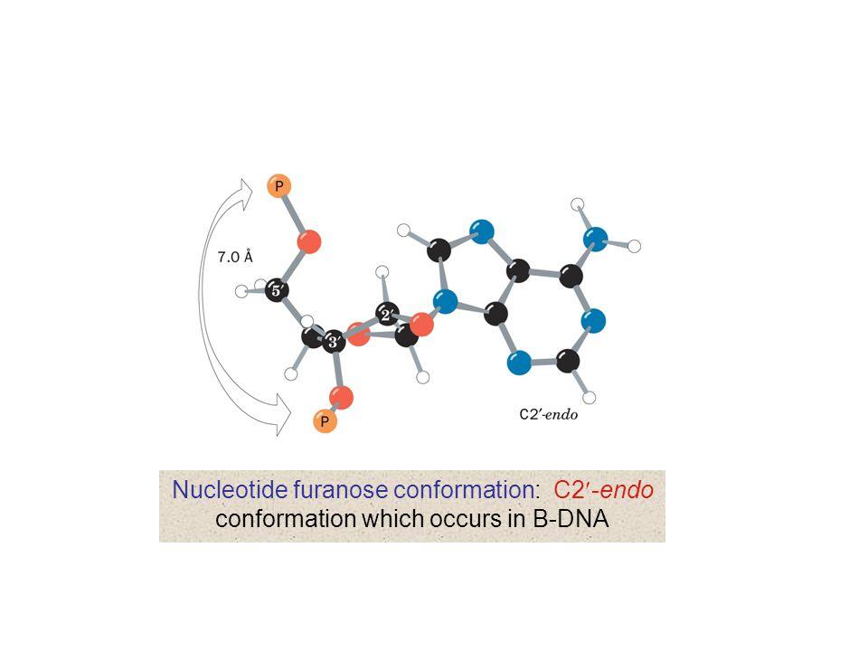 Non-Watson-Crick base pairs: Hoogsteen pairing between adenine and thymine residues in the crystal structure of 9-methyladenine·1-methylthymine