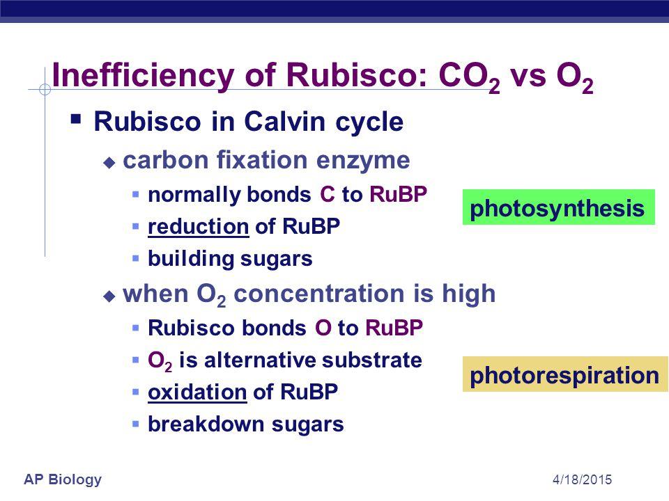 AP Biology 4/18/2015 6C unstable intermediate 1C CO 2 Calvin cycle review 5C RuBP 3C 2x PGA ADP ATP 3C 2x 3C x2 PGAL NADP NADPH ADP ATP PGAL to make glucose Rubisco