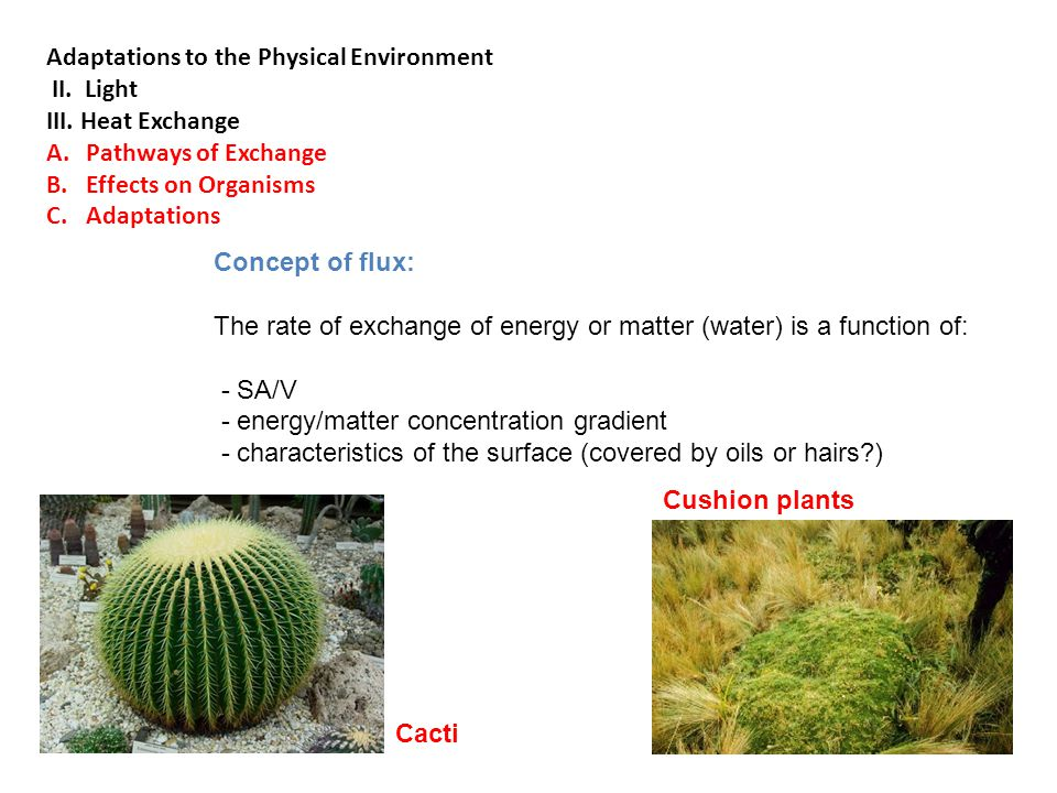 Cushion plants Cacti Concept of flux: The rate of exchange of energy or matter (water) is a function of: - SA/V - energy/matter concentration gradient - characteristics of the surface (covered by oils or hairs?) Adaptations to the Physical Environment II.