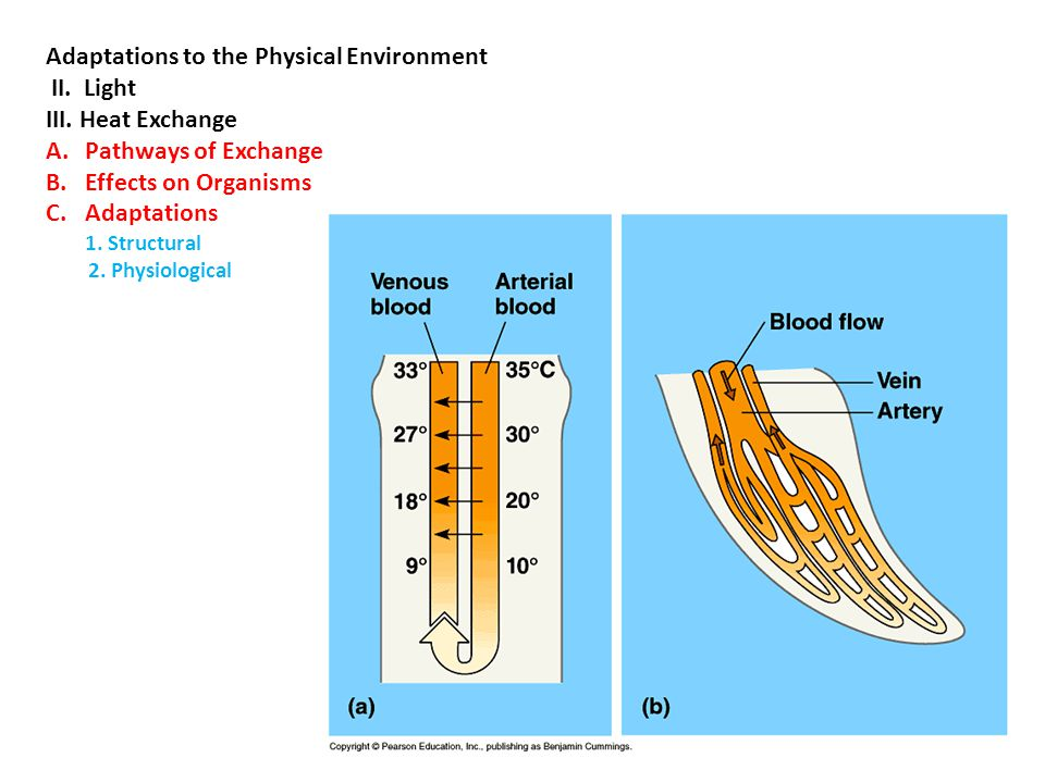 Adaptations to the Physical Environment II. Light III. Heat Exchange A.Pathways of Exchange B.Effects on Organisms C.Adaptations 1. Structural 2. Phys