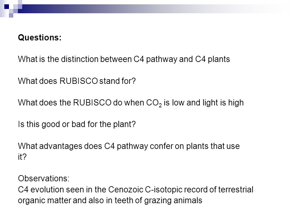 Questions: What is the distinction between C4 pathway and C4 plants What does RUBISCO stand for? What does the RUBISCO do when CO 2 is low and light i