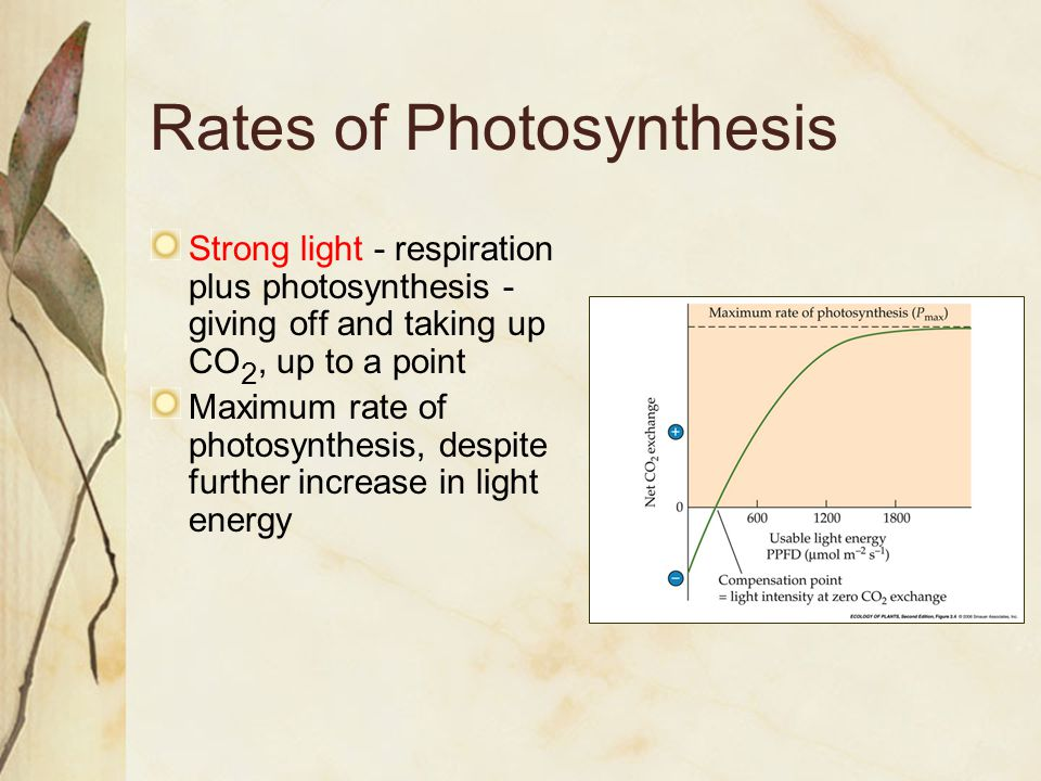 CAM Photosynthesis CAM uses temporal separation of light capture, carbon fixation rather than spatial separation as in C 4 CO 2 captured at night, converted into organic acids