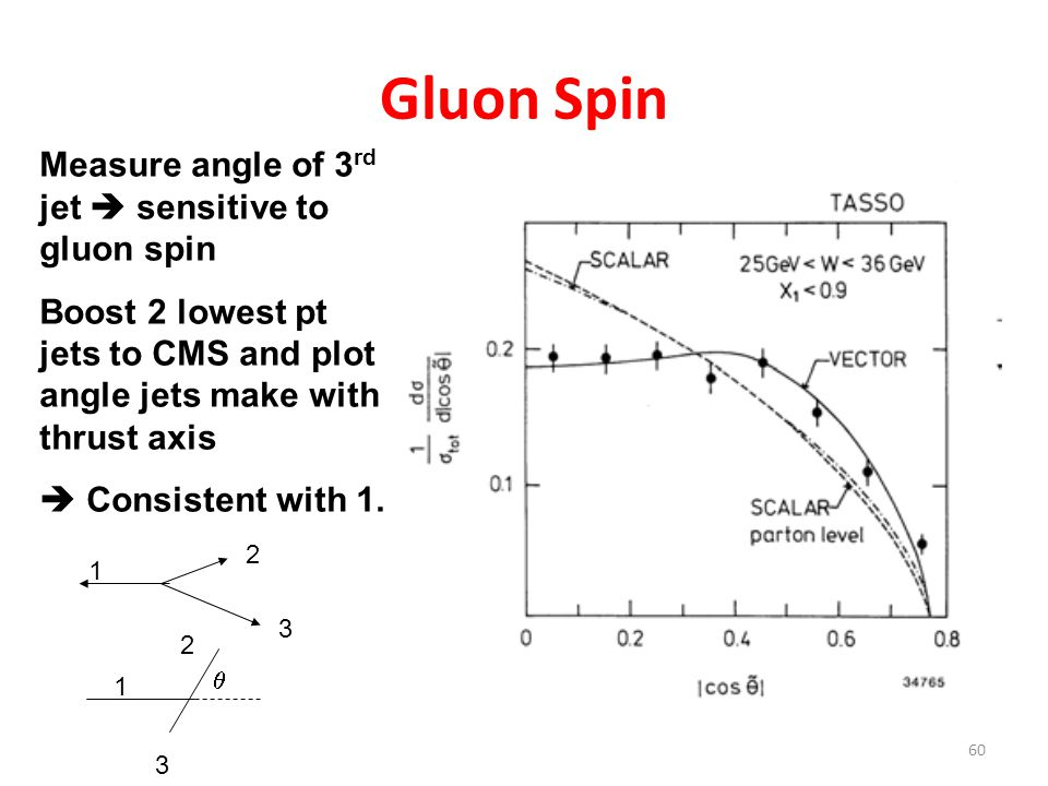 60 Gluon Spin Measure angle of 3 rd jet  sensitive to gluon spin Boost 2 lowest pt jets to CMS and plot angle jets make with thrust axis  Consistent