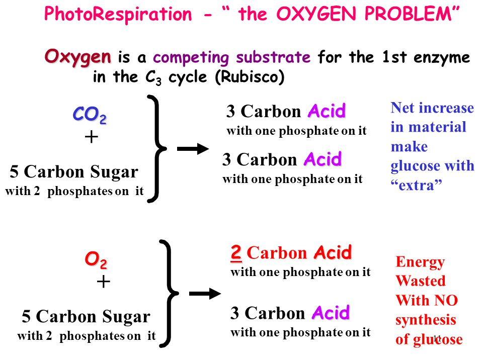 """11 PhotoRespiration - """" the OXYGEN PROBLEM"""" Oxygen Oxygen is a competing substrate for the 1st enzyme in the C 3 cycle (Rubisco) O2O2O2O2 5 Carbon Sug"""