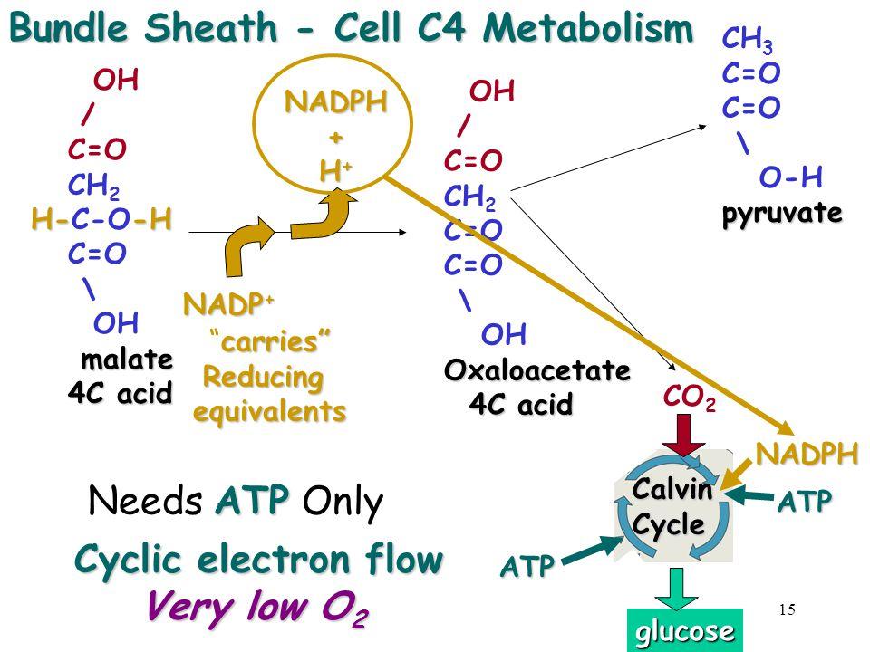 "15 OH / C=O CH 2 C=O \ OHOxaloacetate 4C acid 4C acid OH / C=O CH 2 H--H H-C-O-H C=O \ OH malate malate 4C acid 4C acidNADPH+ H + NADP + carries"" ""car"