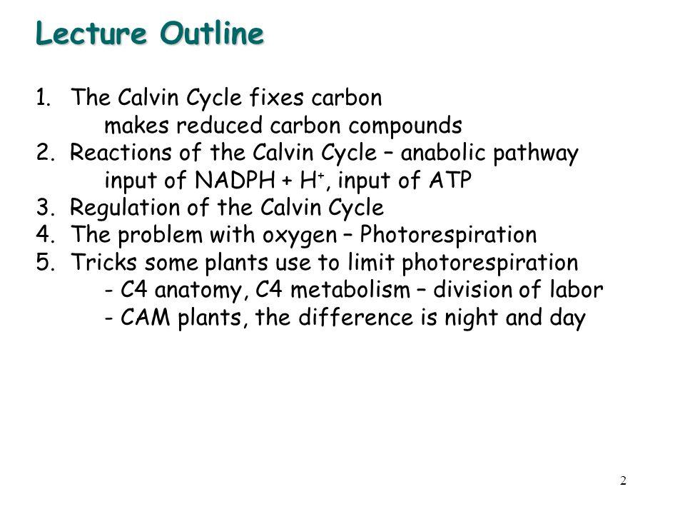 3 DARK REACTIONS energy utilization The Calvin Cycle