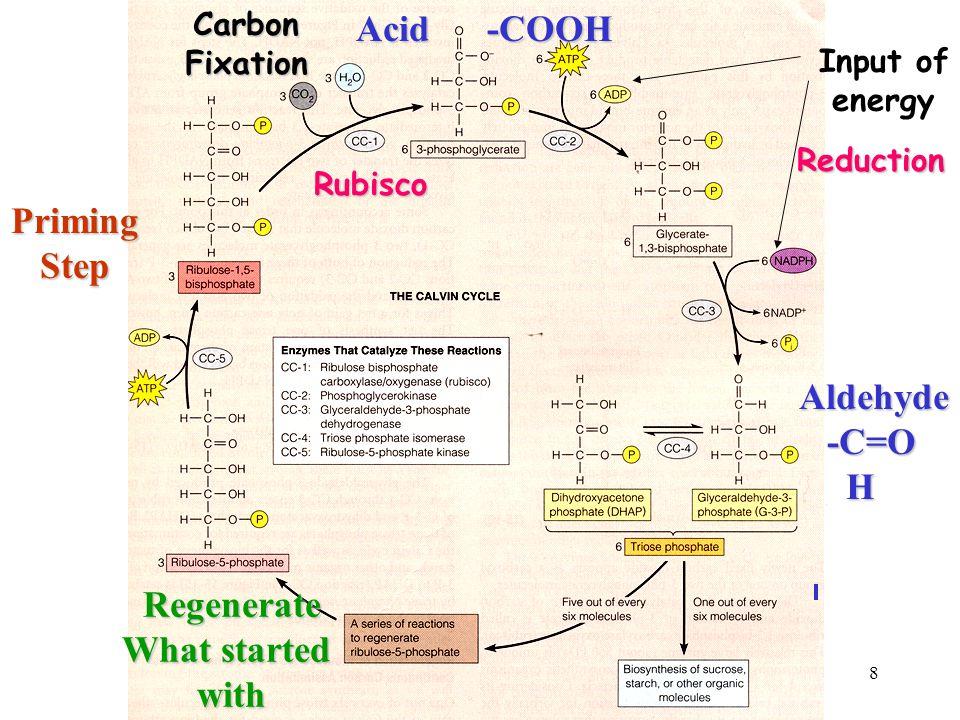 8 Acid -COOH Aldehyde -C=O -C=O H PrimingStep Input of energyRegenerate What started withCarbonFixationReduction Rubisco