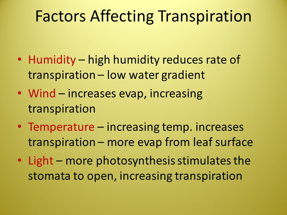 Factors Affecting Transpiration Humidity – high humidity reduces rate of transpiration – low water gradient Wind – increases evap, increasing transpir