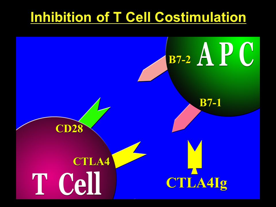 Inhibition of T Cell Costimulation