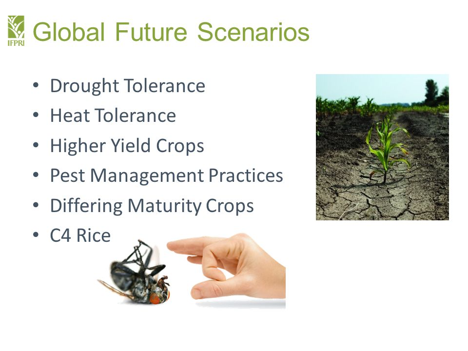 Global Future Scenarios Drought Tolerance Heat Tolerance Higher Yield Crops Pest Management Practices Differing Maturity Crops C4 Rice
