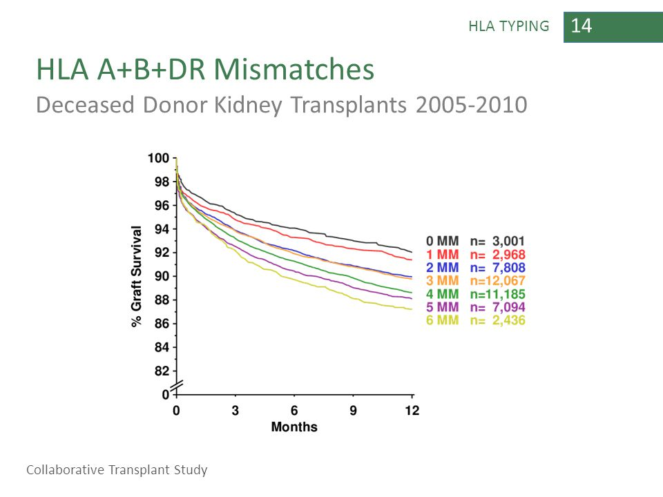14 HLA TYPING HLA A+B+DR Mismatches Deceased Donor Kidney Transplants 2005-2010 Collaborative Transplant Study