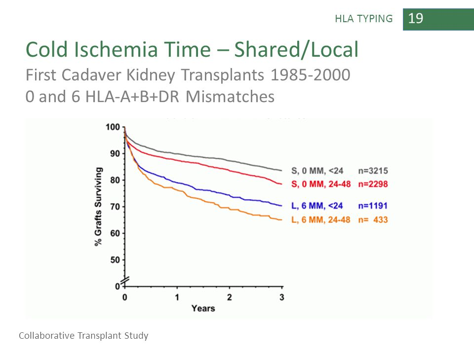 19 HLA TYPING Cold Ischemia Time – Shared/Local First Cadaver Kidney Transplants 1985-2000 0 and 6 HLA-A+B+DR Mismatches Collaborative Transplant Stud