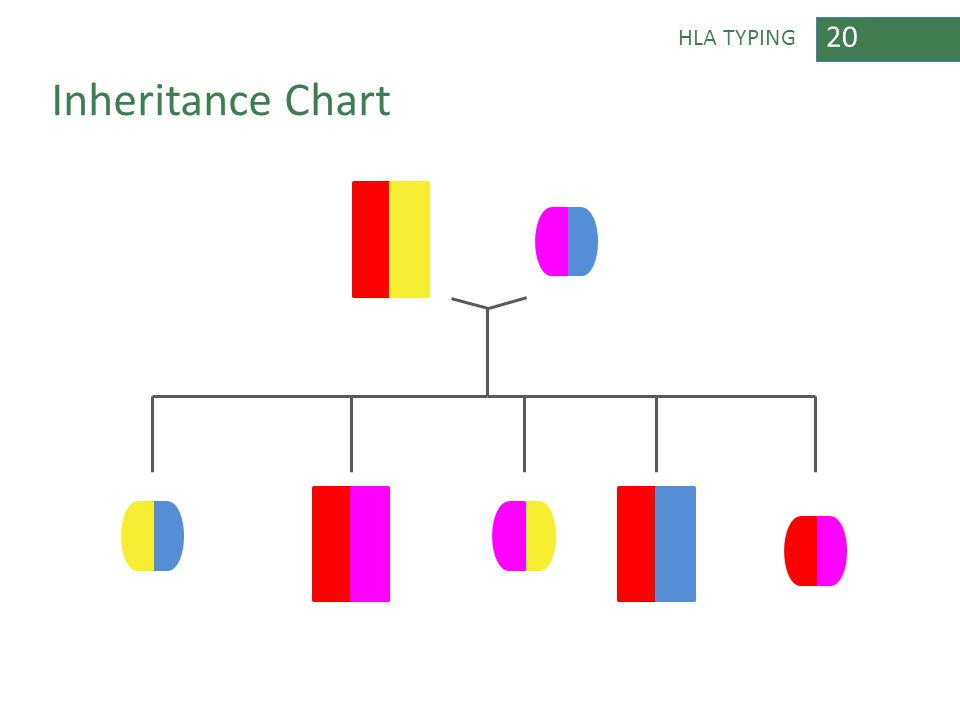 20 HLA TYPING Inheritance Chart