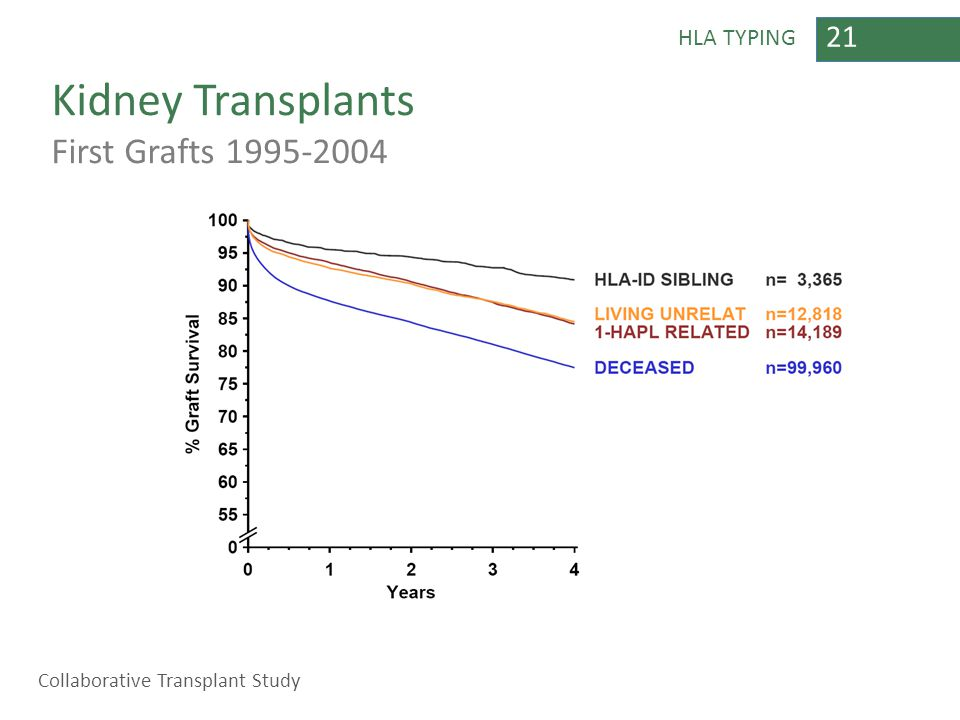 21 HLA TYPING Kidney Transplants First Grafts 1995-2004 Collaborative Transplant Study