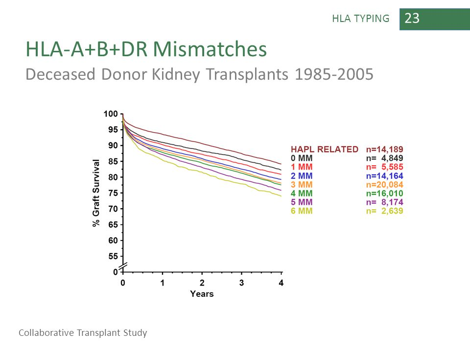 23 HLA TYPING HLA-A+B+DR Mismatches Deceased Donor Kidney Transplants 1985-2005 Collaborative Transplant Study