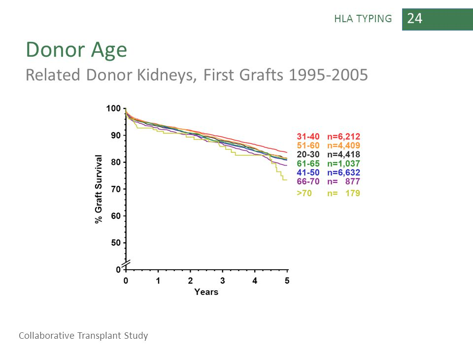 24 HLA TYPING Donor Age Related Donor Kidneys, First Grafts 1995-2005 Collaborative Transplant Study