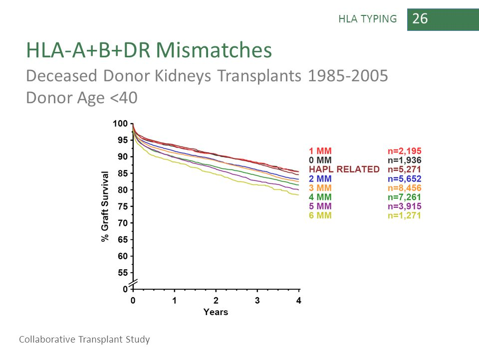 26 HLA TYPING HLA-A+B+DR Mismatches Deceased Donor Kidneys Transplants 1985-2005 Donor Age <40 Collaborative Transplant Study
