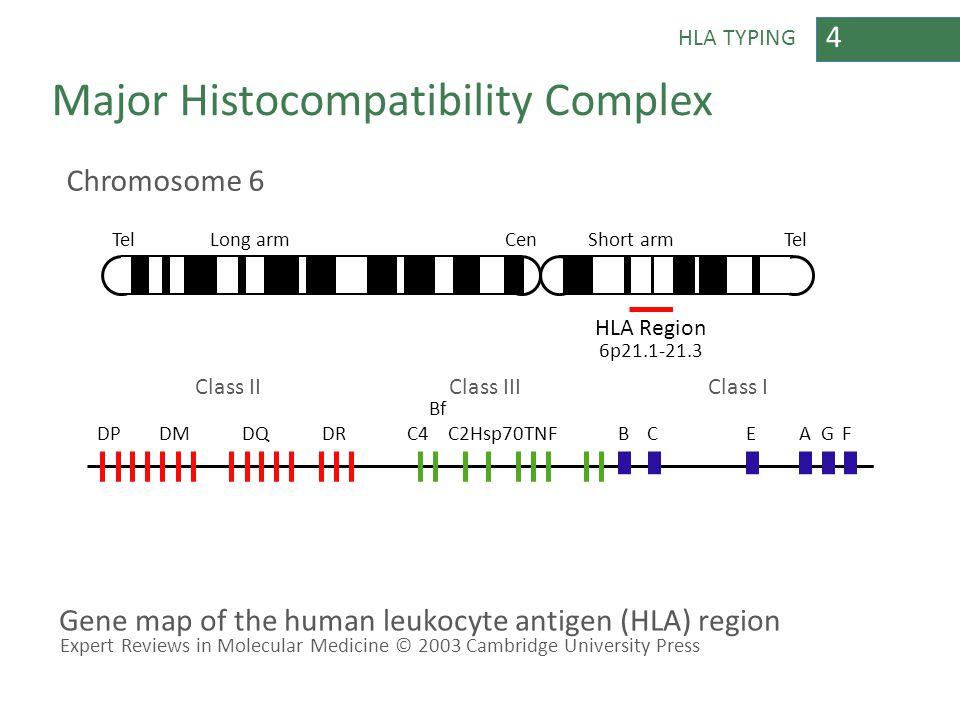 4 Major Histocompatibility Complex Chromosome 6 TelLong armCenShort armTel 6p21.1-21.3 Class IIClass IIIClass I DPDMDQDRC4C2Hsp70TNFBCEAGF HLA Region Gene map of the human leukocyte antigen (HLA) region Expert Reviews in Molecular Medicine © 2003 Cambridge University Press Bf