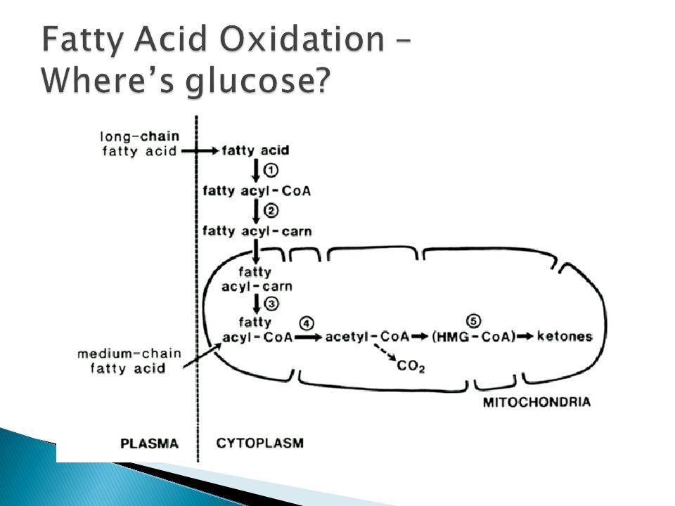 Fatty Acid Oxidation