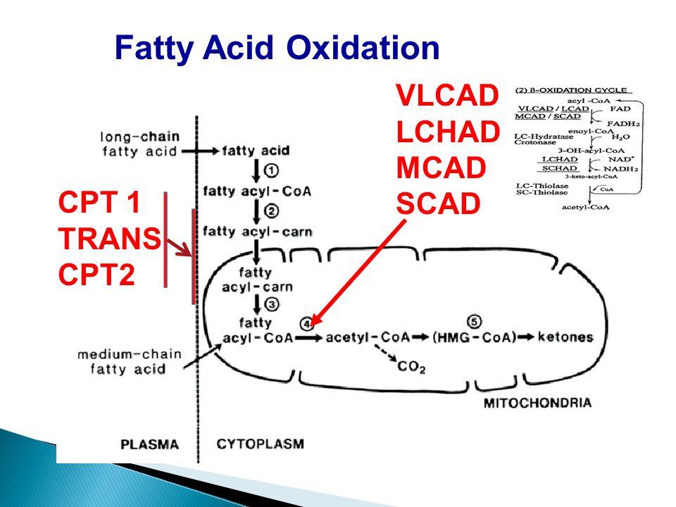 Fatty Acid Oxidation VLCAD LCHAD MCAD SCAD CPT 1 TRANS CPT2