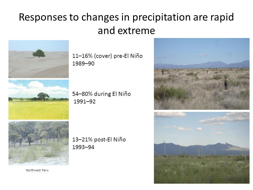 Responses to changes in precipitation are rapid and extreme 11–16% (cover) pre-El Niño 1989–90 54–80% during El Niño 1991–92 13–21% post-El Niño 1993–