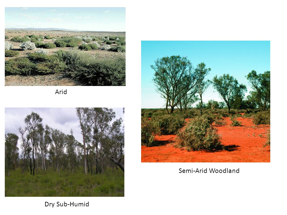 Arid Dry Sub-Humid Semi-Arid Woodland
