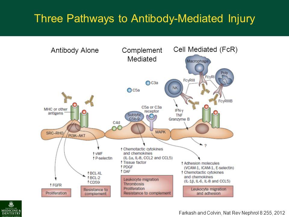 Three Pathways to Antibody-Mediated Injury Antibody Alone Complement Mediated Cell Mediated (FcR) Farkash and Colvin, Nat Rev Nephrol 8:255, 2012