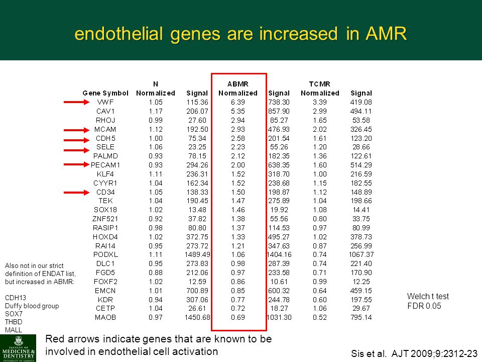 endothelial genes are increased in AMR Red arrows indicate genes that are known to be involved in endothelial cell activation Welch t test FDR 0.05 Si