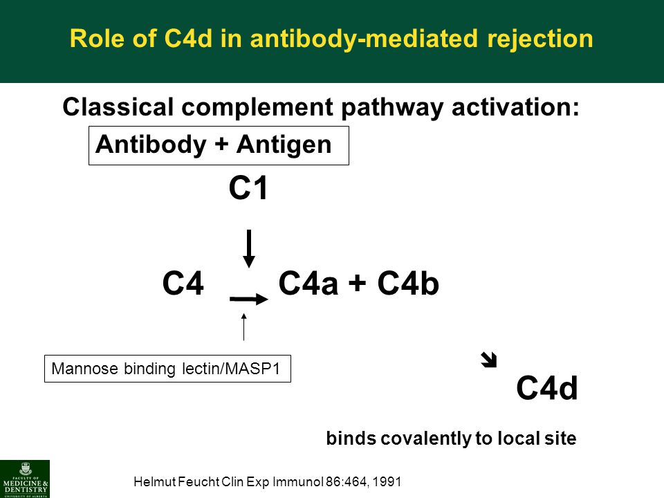 Classical complement pathway activation: Antibody + Antigen C1 C4 C4a + C4b  C4d binds covalently to local site Helmut Feucht Clin Exp Immunol 86:464