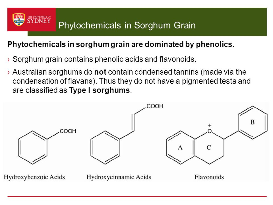 Phytochemicals in Sorghum Grain ›Sorghum grain contains phenolic acids and flavonoids. ›Australian sorghums do not contain condensed tannins (made via