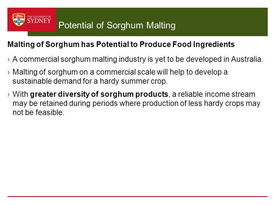 sorghum thesis