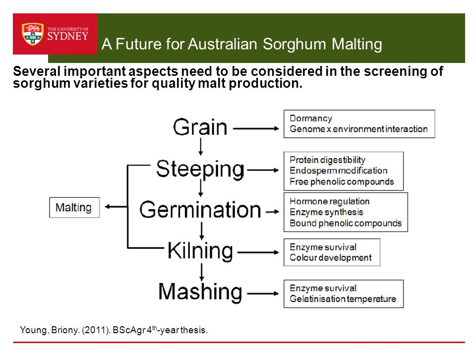 A Future for Australian Sorghum Malting Several important aspects need to be considered in the screening of sorghum varieties for quality malt product