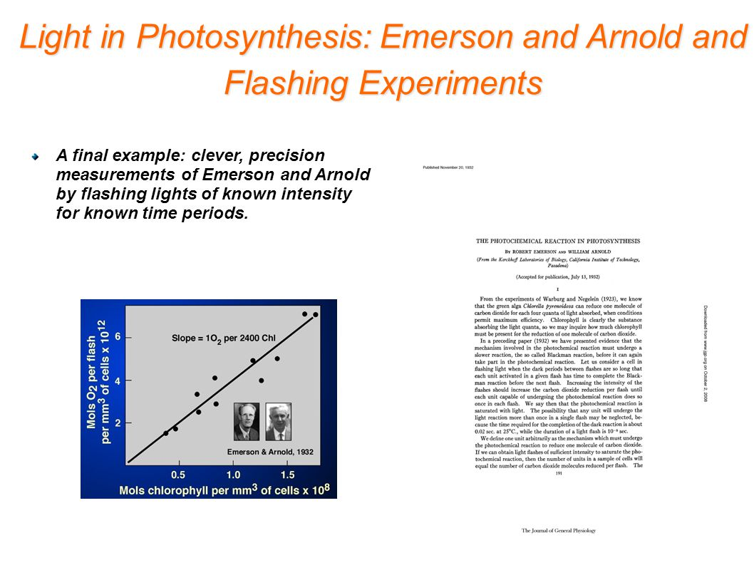 A final example: clever, precision measurements of Emerson and Arnold by flashing lights of known intensity for known time periods.