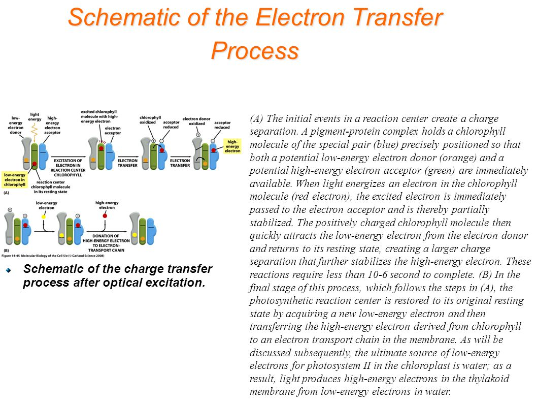 Schematic of the Electron Transfer Process (A) The initial events in a reaction center create a charge separation.