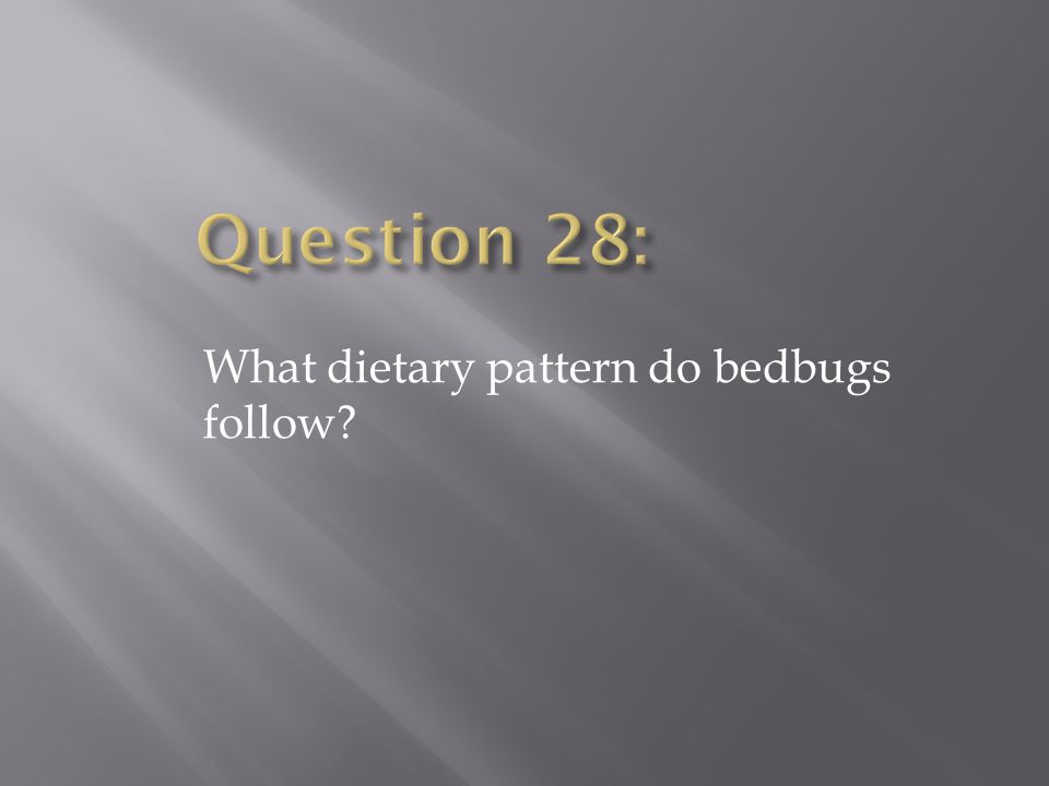 What dietary pattern do bedbugs follow?
