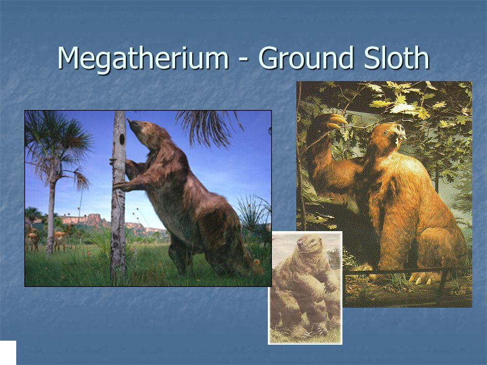 Megatherium - Ground Sloth