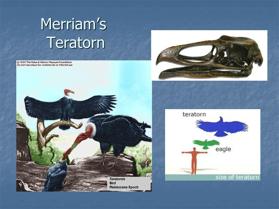 Merriam's Teratorn