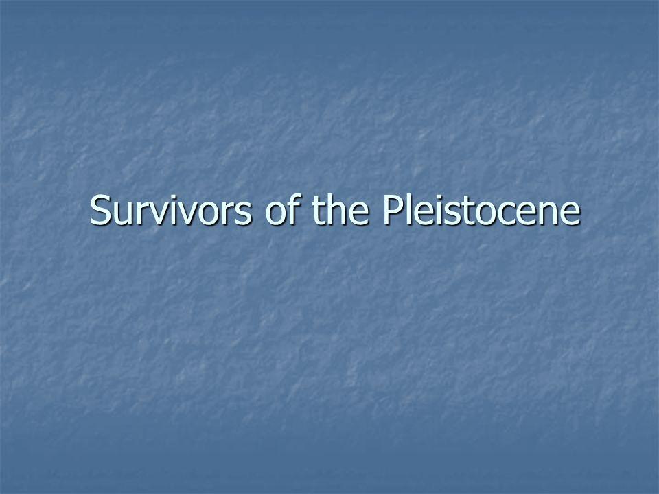 Survivors of the Pleistocene