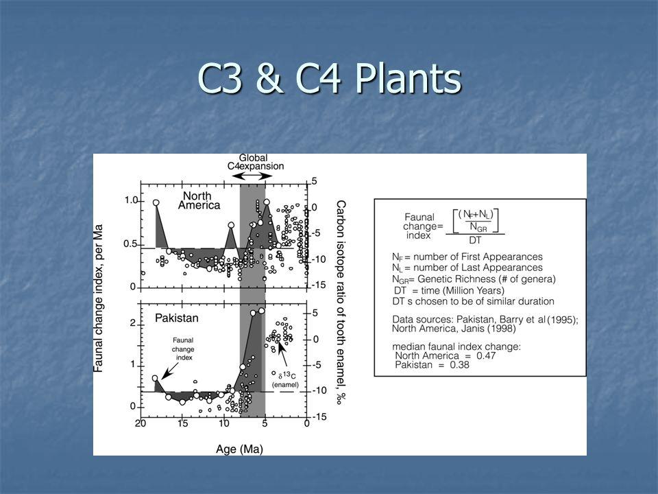 C3 & C4 Plants