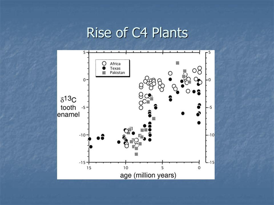 Rise of C4 Plants