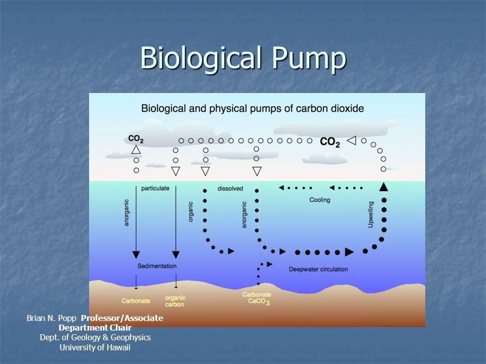 Biological Pump Brian N. Popp Professor/Associate Department Chair Dept.