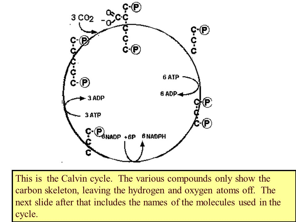 This is the Calvin cycle.