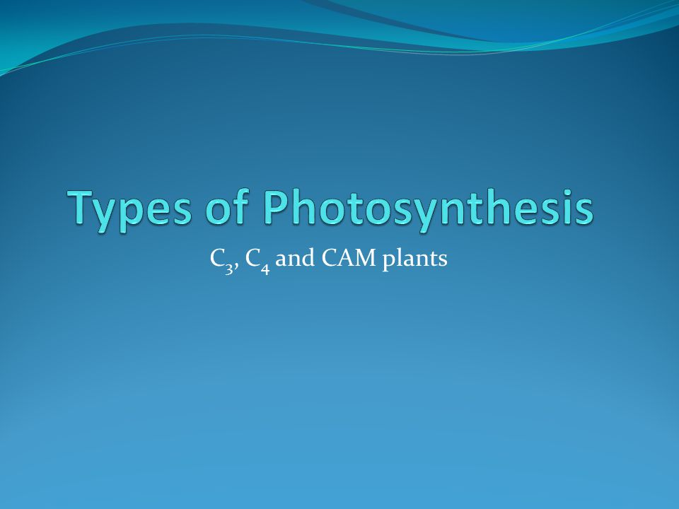 C 3, C 4 and CAM plants