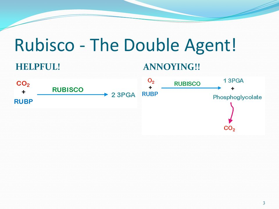 Rubisco - The Double Agent! HELPFUL! ANNOYING!! 3