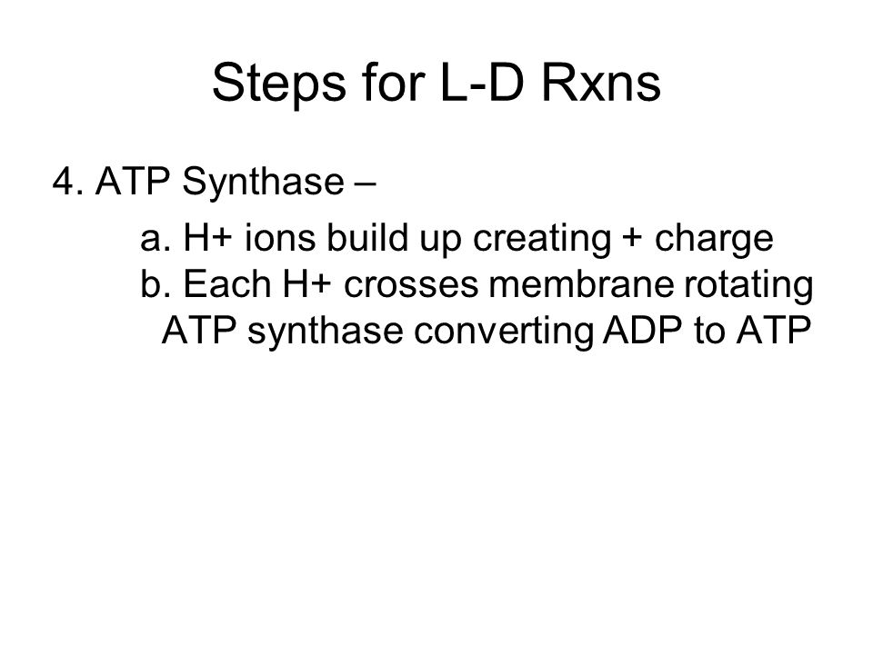Steps for L-D Rxns 4. ATP Synthase – a. H+ ions build up creating + charge b. Each H+ crosses membrane rotating ATP synthase converting ADP to ATP
