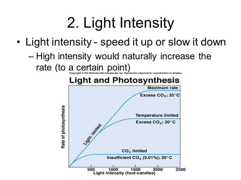 2. Light Intensity Light intensity - speed it up or slow it down –High intensity would naturally increase the rate (to a certain point)