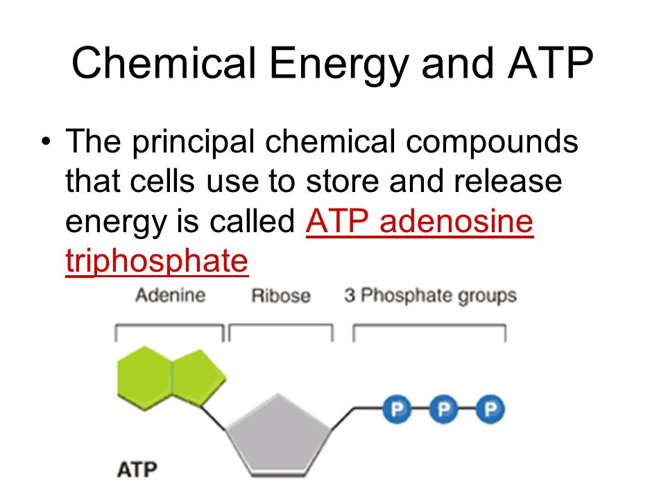 Chemical Energy and ATP The principal chemical compounds that cells use to store and release energy is called ATP adenosine triphosphate