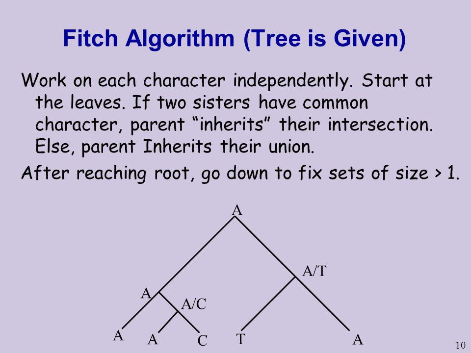 10 Fitch Algorithm (Tree is Given) Work on each character independently.