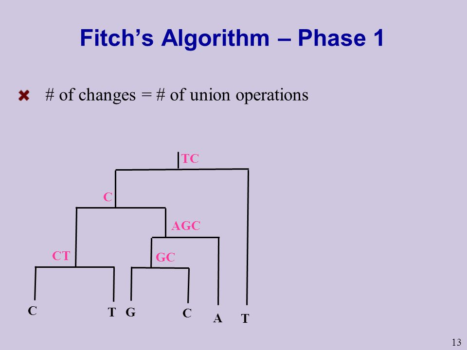 13 Fitch's Algorithm – Phase 1 # of changes = # of union operations TC T CT C C T A G C AGC GC